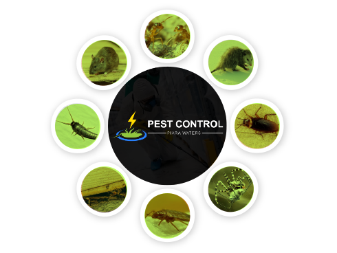 Pest Control Piara Waters